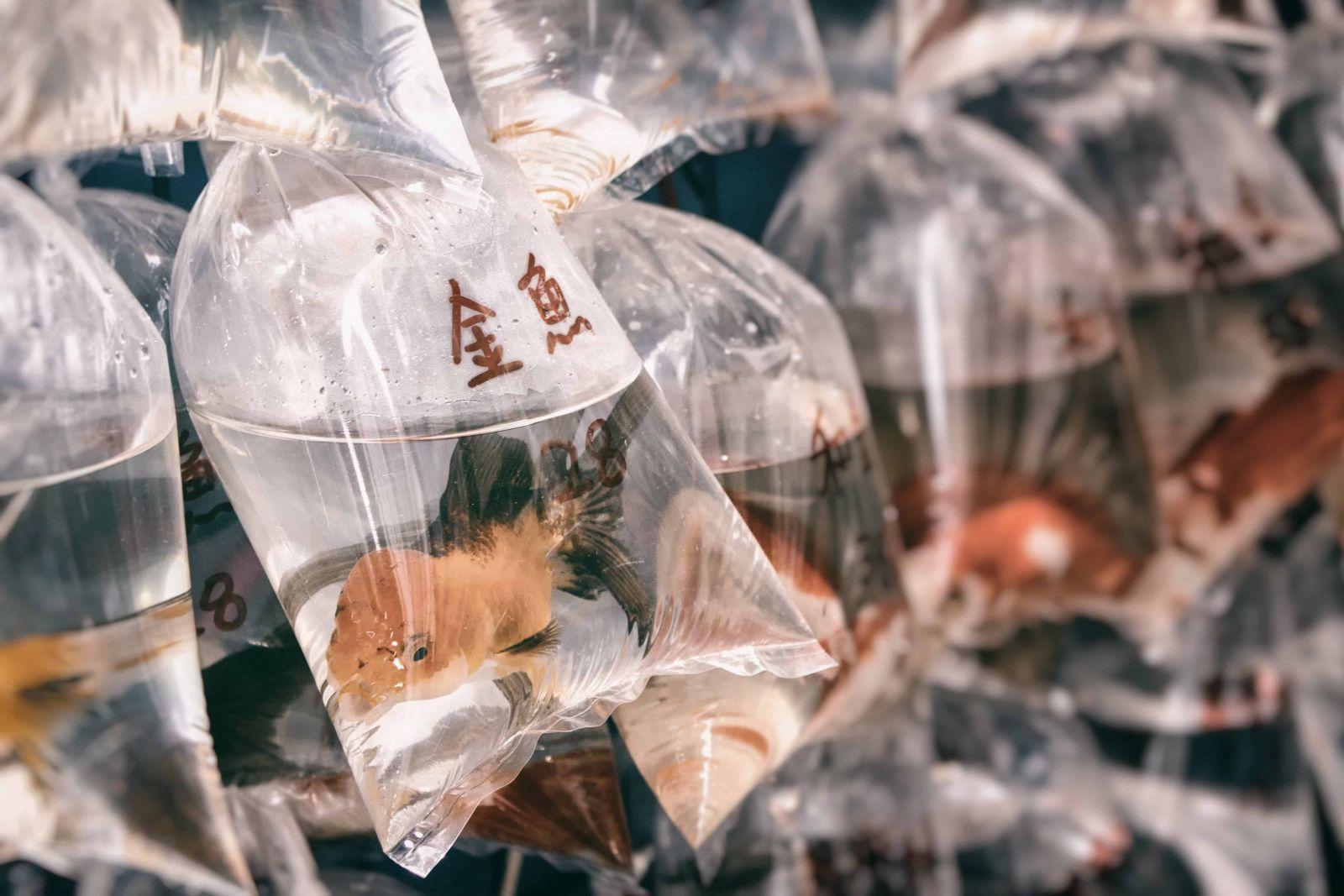 bao bì nhựa được dùng để đựng gần như tất cả mọi thứ