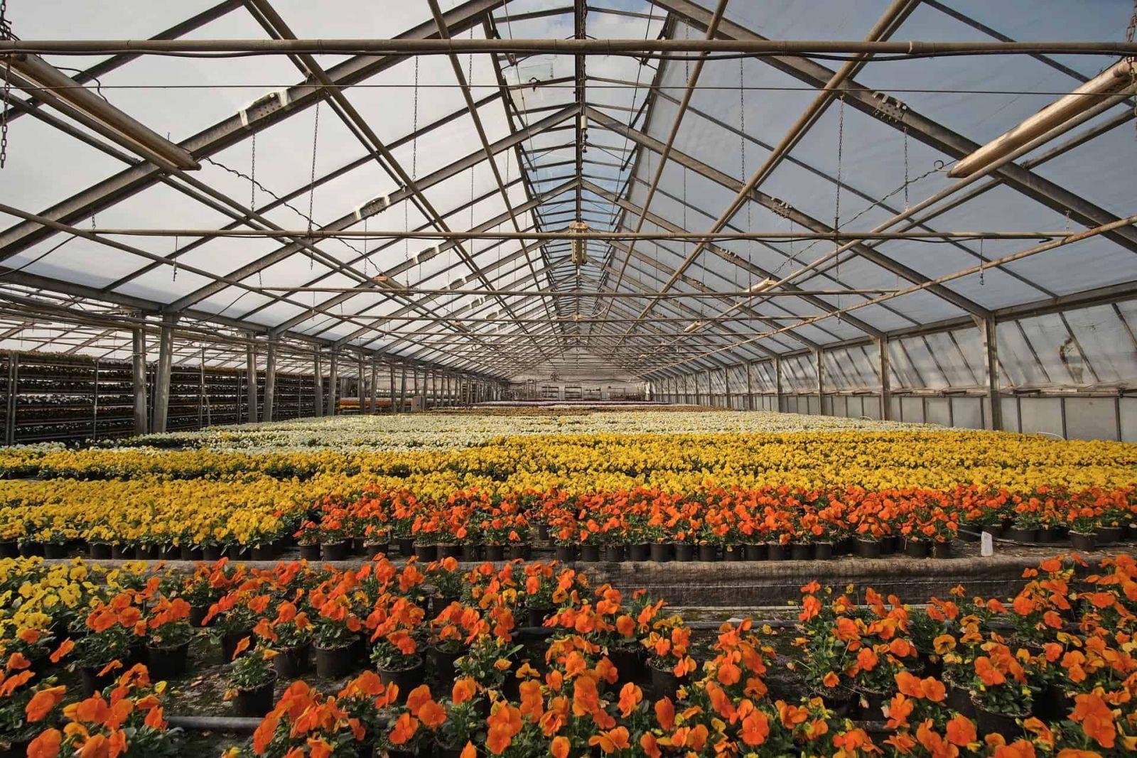 màng nhà kính tạo môi trường ổn định cho cây trồng