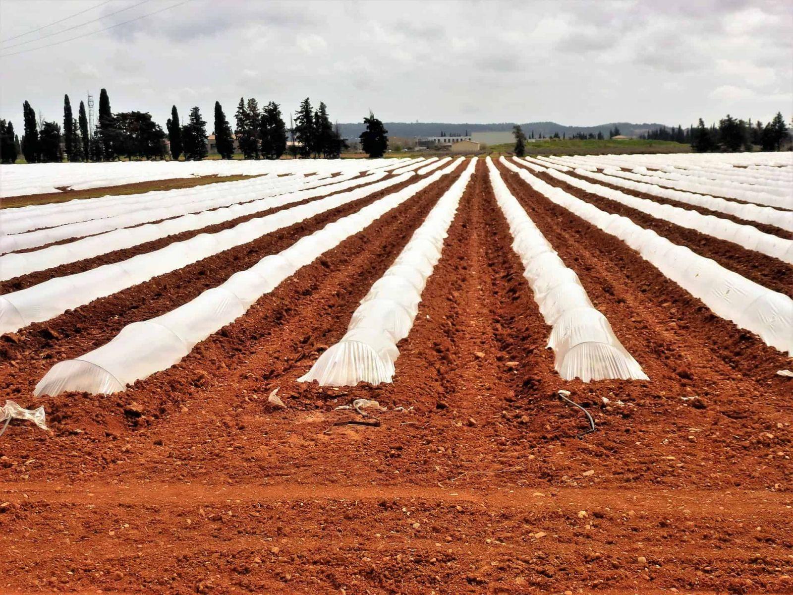 màng phủ nông nghiệp hiện nay đã trở nên rất phổ biến