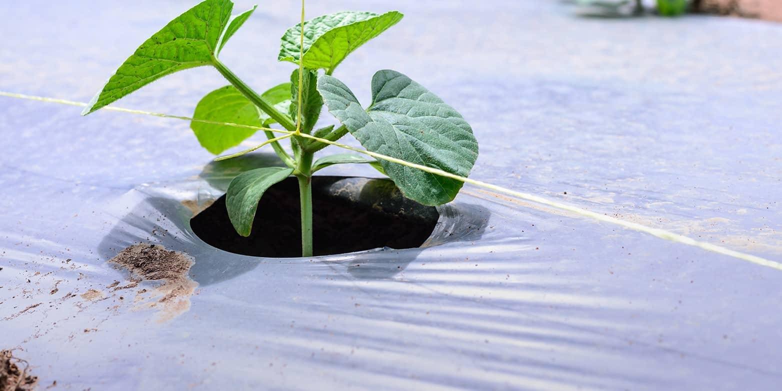 sản phẩm màng phủ nông nghiệp của công ty Khang Lợi